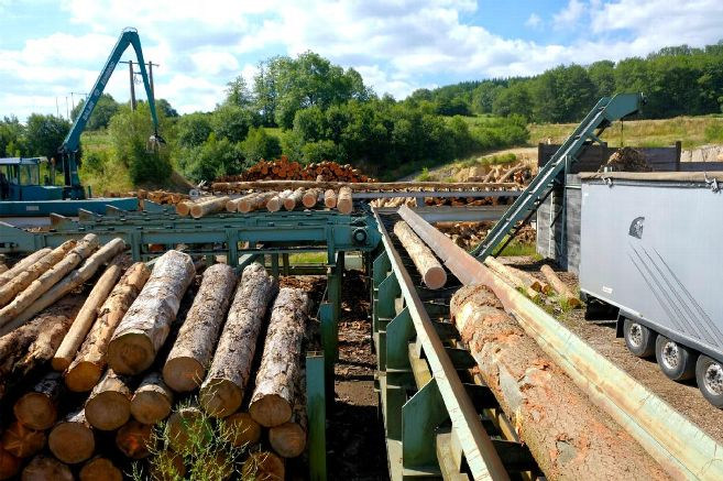 Ces scieurs qui font vivre l'industrie du bois